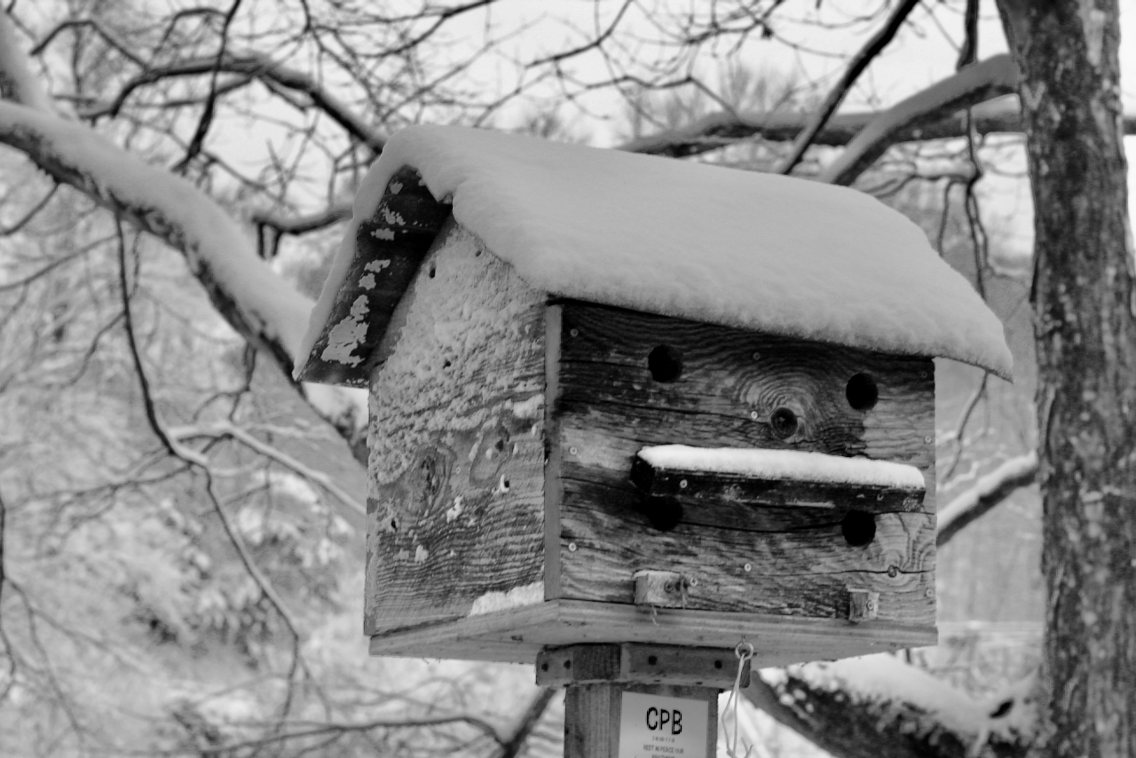 Birdhouses in the Snow